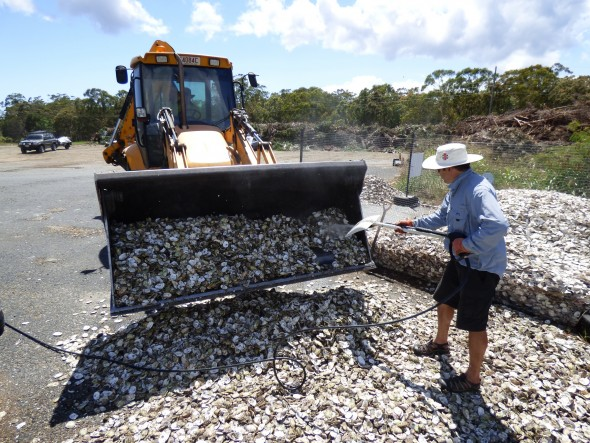 Biosecurity measures for collected shells includes minimum 3 months desiccation, pressure washing and turning over the shells.
